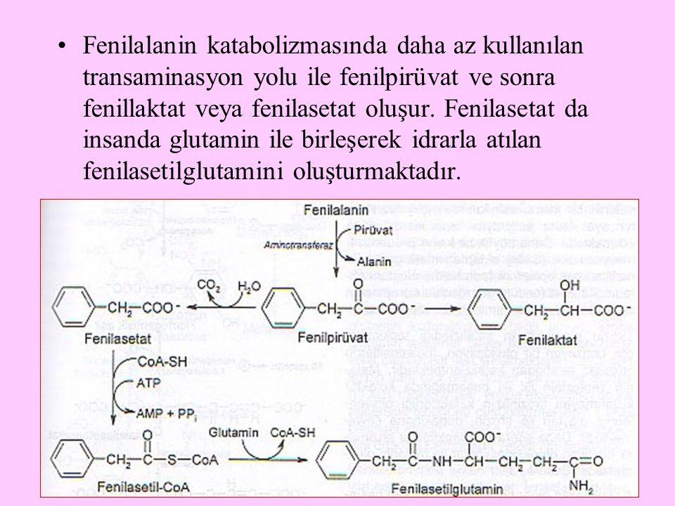 15 Fenilalanin katabolizmasında daha az kullanılan transaminasyon yolu ile fenilpirüvat ve sonra fenillaktat veya fenilasetat oluşur. Fenilasetat da i
