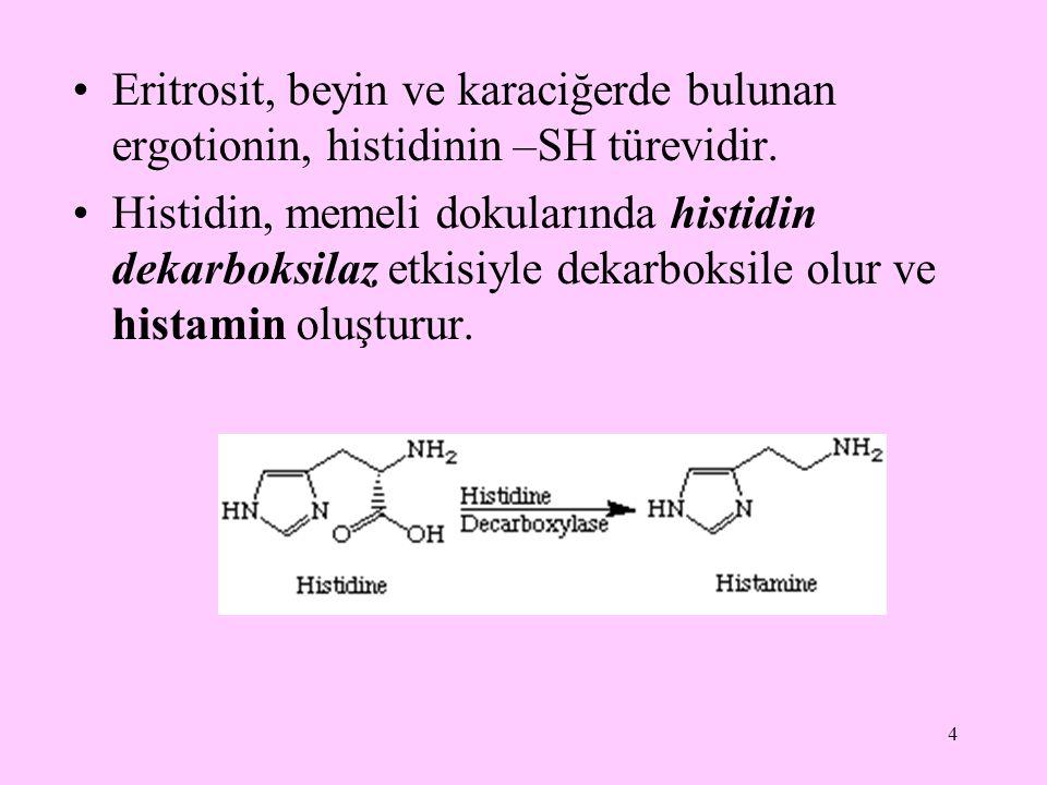 4 Eritrosit, beyin ve karaciğerde bulunan ergotionin, histidinin –SH türevidir. Histidin, memeli dokularında histidin dekarboksilaz etkisiyle dekarbok