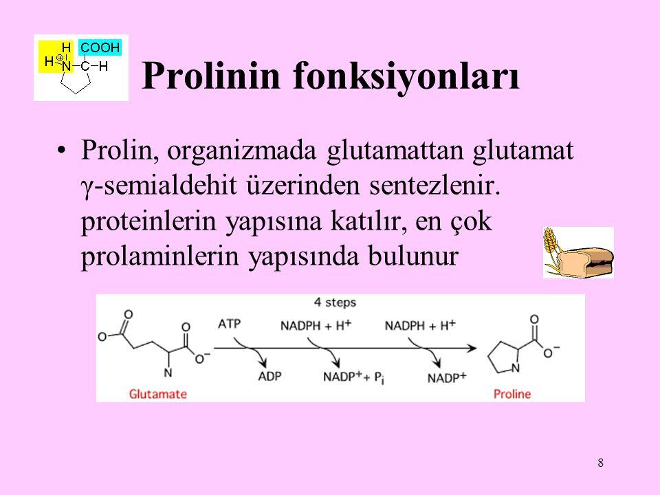 8 Prolinin fonksiyonları Prolin, organizmada glutamattan glutamat γ-semialdehit üzerinden sentezlenir. proteinlerin yapısına katılır, en çok prolaminl