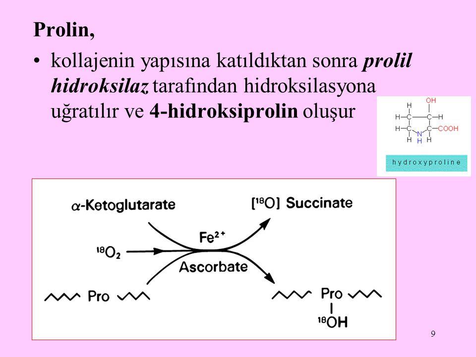 9 Prolin, kollajenin yapısına katıldıktan sonra prolil hidroksilaz tarafından hidroksilasyona uğratılır ve 4-hidroksiprolin oluşur