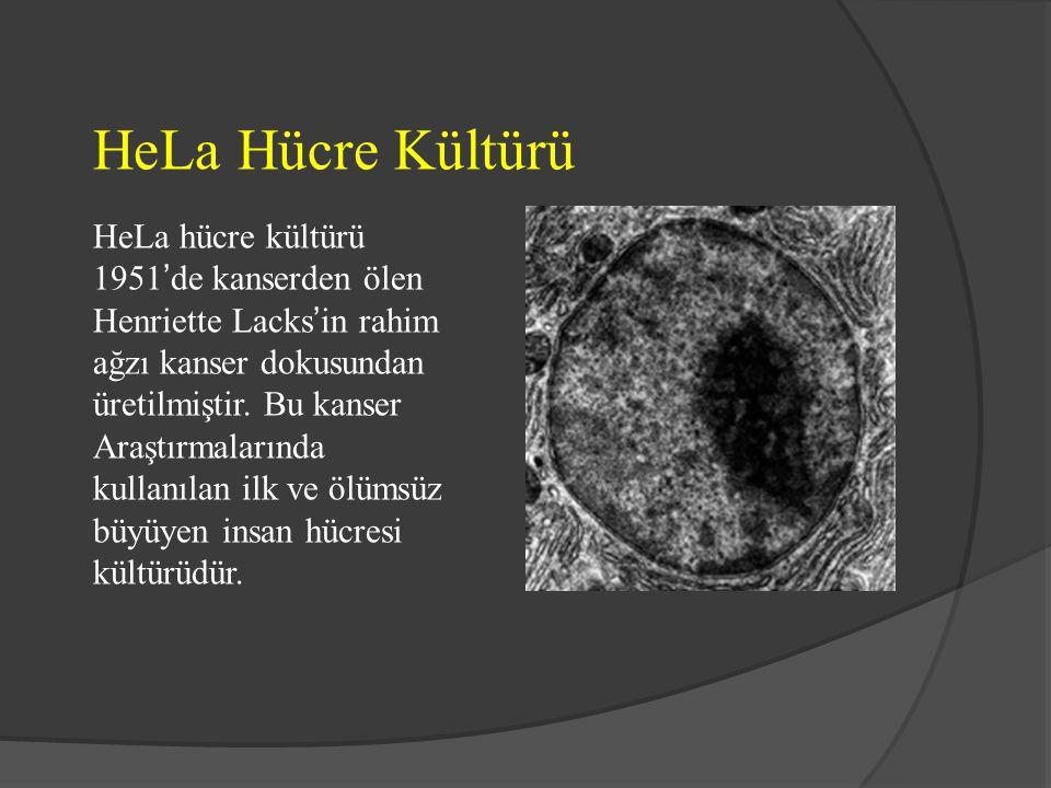HeLa Hücre Kültürü HeLa hücre kültürü 1951'de kanserden ölen Henriette Lacks'in rahim ağzı kanser dokusundan üretilmiştir. Bu kanser Araştırmalarında