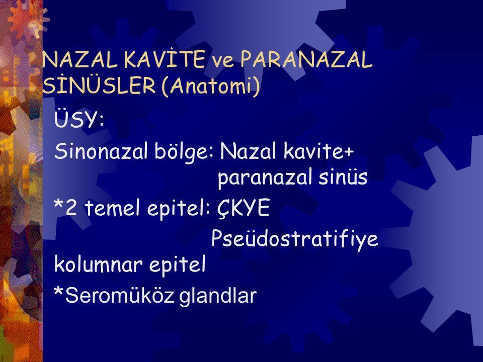 NAZAL KAVİTE ve PARANAZAL SİNÜSLER (Anatomi) ÜSY: Sinonazal bölge: Nazal kavite+ paranazal sinüs *2 temel epitel: ÇKYE Pseüdostratifiye kolumnar epitel * Seromüköz glandlar