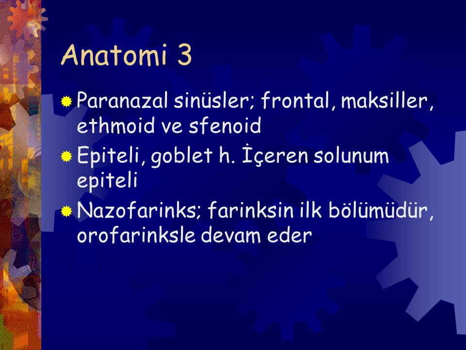 Anatomi 3  Paranazal sinüsler; frontal, maksiller, ethmoid ve sfenoid  Epiteli, goblet h.