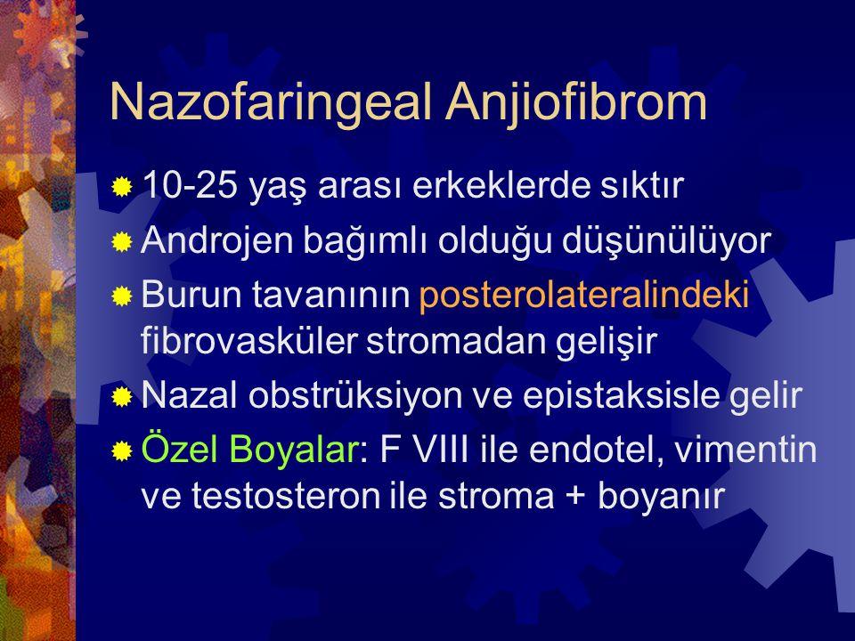 Nazofaringeal Anjiofibrom  10-25 yaş arası erkeklerde sıktır  Androjen bağımlı olduğu düşünülüyor  Burun tavanının posterolateralindeki fibrovasküler stromadan gelişir  Nazal obstrüksiyon ve epistaksisle gelir  Özel Boyalar: F VIII ile endotel, vimentin ve testosteron ile stroma + boyanır