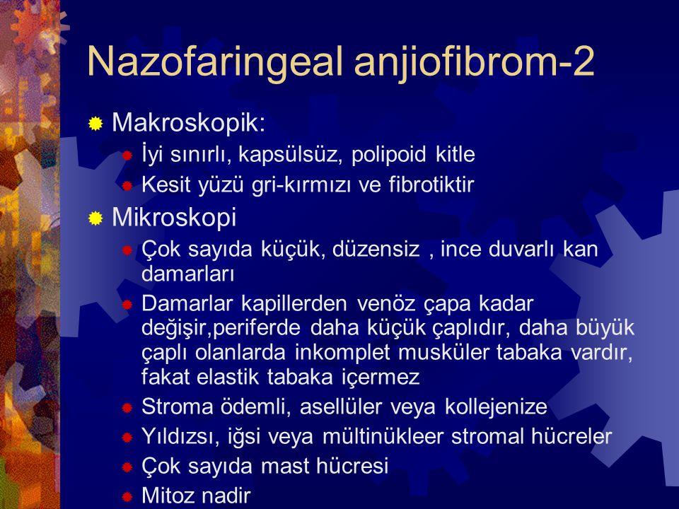 Nazofaringeal anjiofibrom-2  Makroskopik:  İyi sınırlı, kapsülsüz, polipoid kitle  Kesit yüzü gri-kırmızı ve fibrotiktir  Mikroskopi  Çok sayıda küçük, düzensiz, ince duvarlı kan damarları  Damarlar kapillerden venöz çapa kadar değişir,periferde daha küçük çaplıdır, daha büyük çaplı olanlarda inkomplet musküler tabaka vardır, fakat elastik tabaka içermez  Stroma ödemli, asellüler veya kollejenize  Yıldızsı, iğsi veya mültinükleer stromal hücreler  Çok sayıda mast hücresi  Mitoz nadir