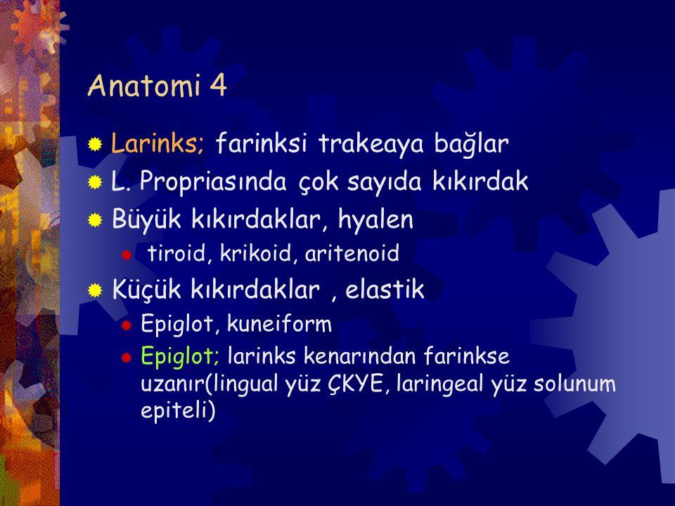 Olfaktör nöroblastom-3  Ayırıcı tanı:  1-Andiferansiye CA  Rozet ve fibriler zemin yok  Damar invazyonu, mitoz ve nekroz fazla  2- PNET  Nöroendokrin markırlar yardımcı değil, CD 99  Karakteristik olarak t 811, 22)  3- Pituter adenomu  4- Malign lenfoma  5- Plazmositom  6- Rhabdomyosarkom