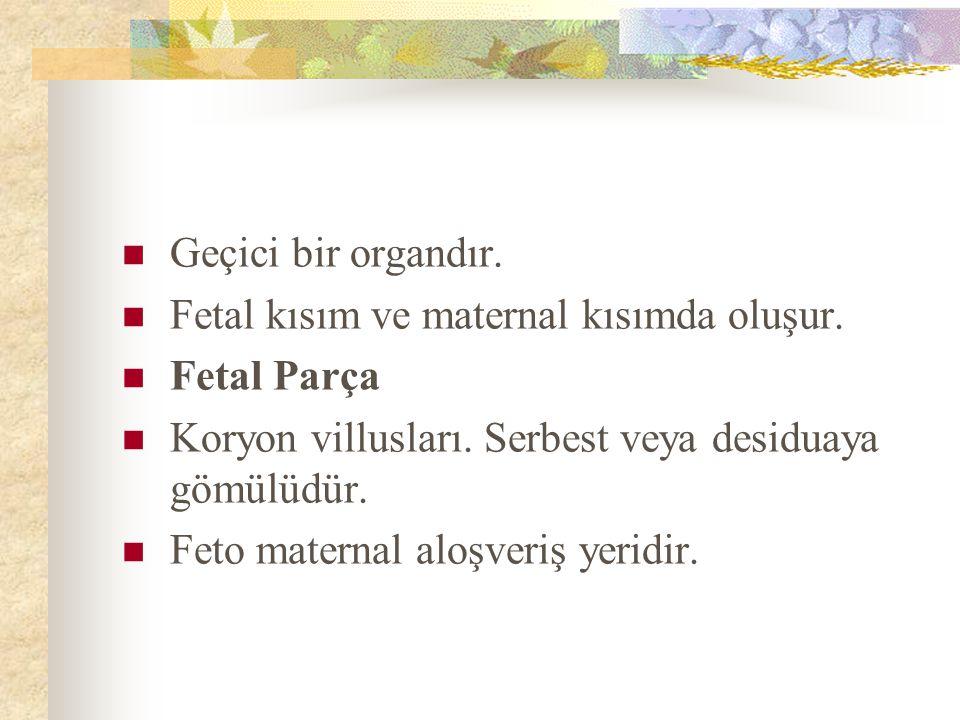 Geçici bir organdır. Fetal kısım ve maternal kısımda oluşur. Fetal Parça Koryon villusları. Serbest veya desiduaya gömülüdür. Feto maternal aloşveriş