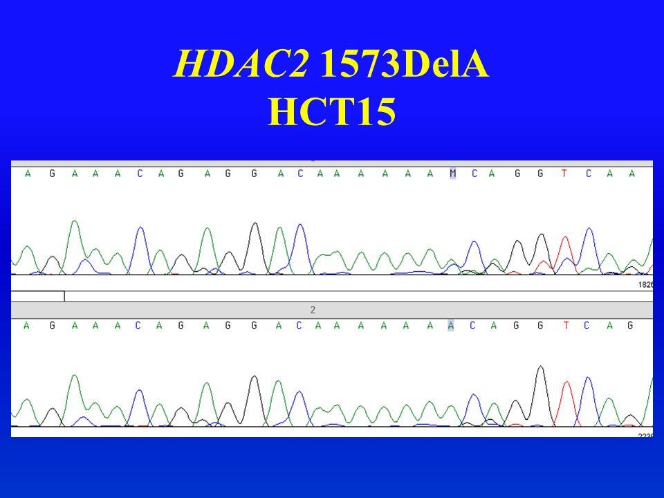 HDAC2 1573DelA HCT15