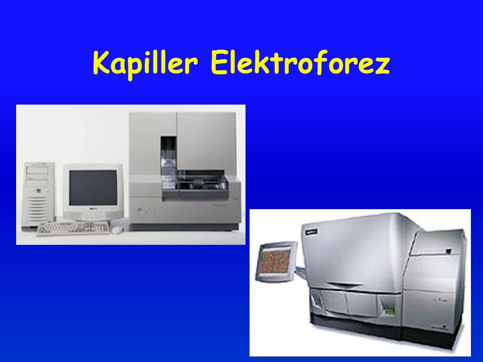 Kapiller Elektroforez