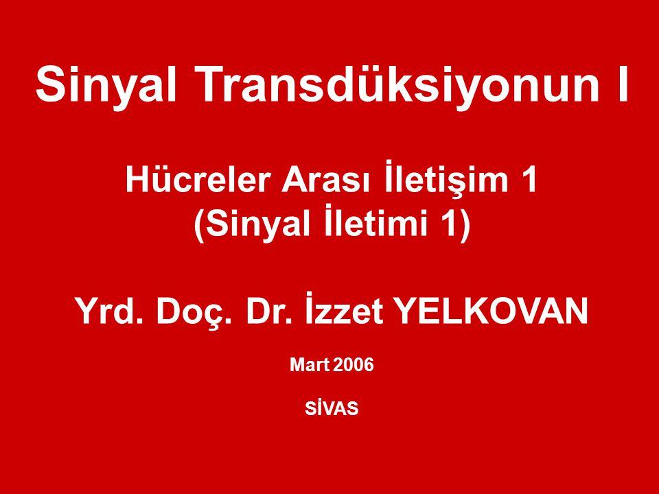 Sinyal Transdüksiyonun I Hücreler Arası İletişim 1 (Sinyal İletimi 1) Yrd.