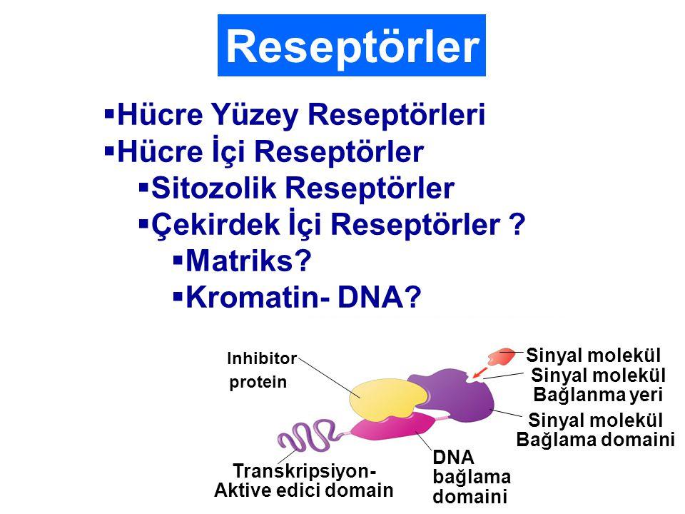 Reseptörler  Hücre Yüzey Reseptörleri  Hücre İçi Reseptörler  Sitozolik Reseptörler  Çekirdek İçi Reseptörler .