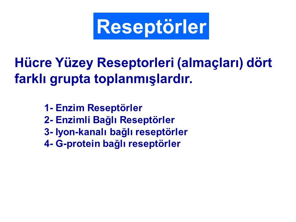 Reseptörler Hücre Yüzey Reseptorleri (almaçları) dört farklı grupta toplanmışlardır.