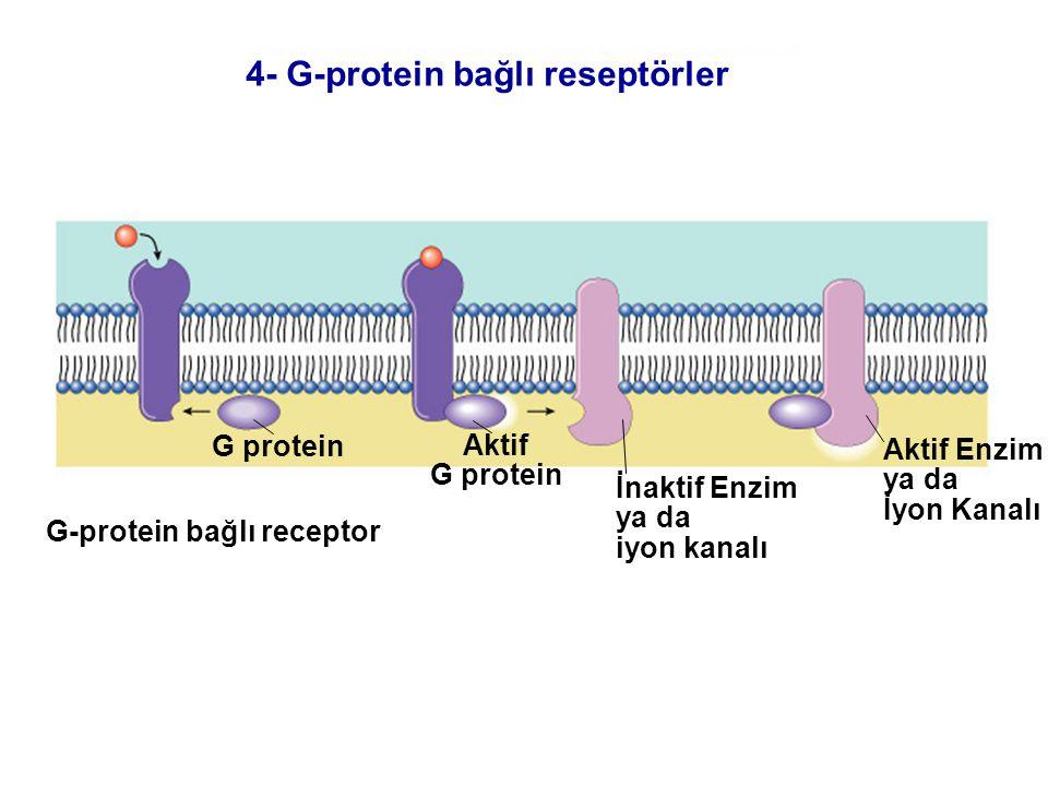 Fig. 7.5c (TEArt) G protein Aktif G protein İnaktif Enzim ya da iyon kanalı Aktif Enzim ya da İyon Kanalı G-protein bağlı receptor 4- G-protein bağlı