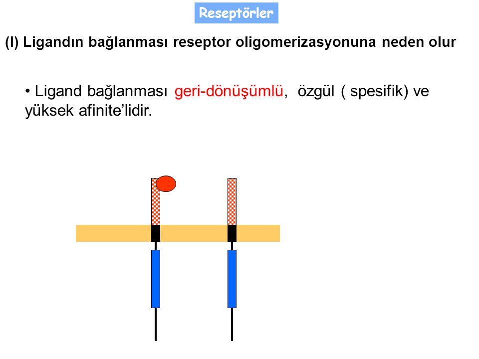 Ligand bağlanması geri-dönüşümlü, özgül ( spesifik) ve yüksek afinite'lidir.