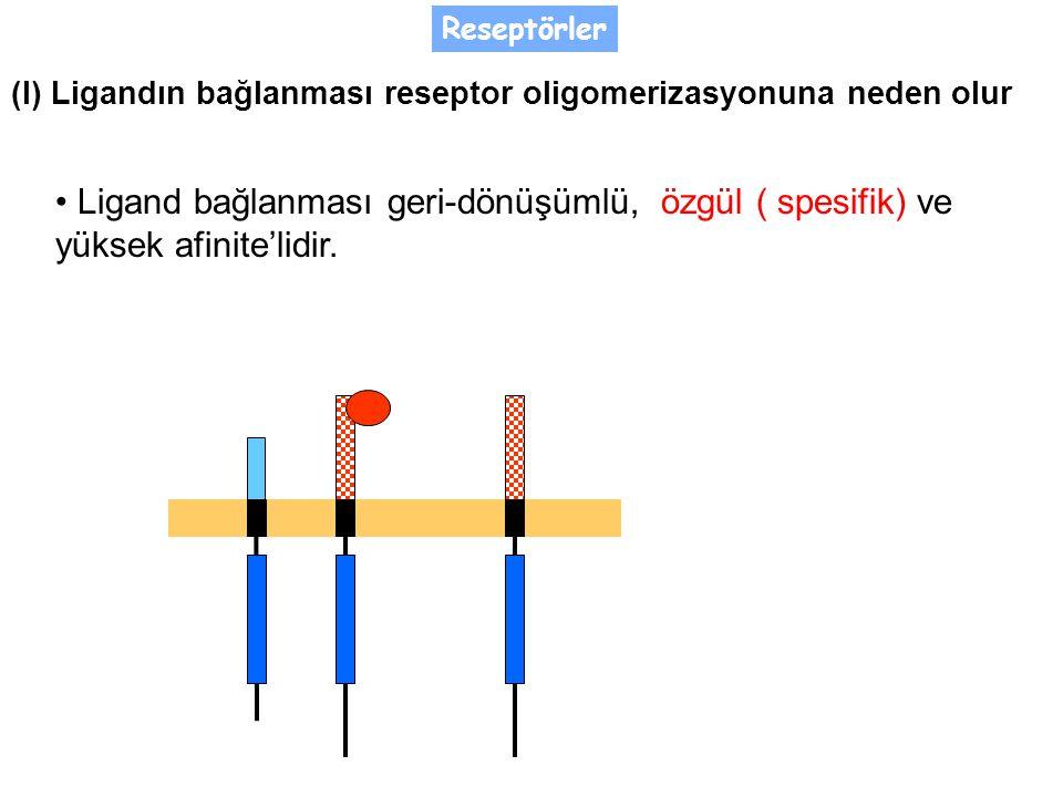 Reseptörler Ligand bağlanması geri-dönüşümlü, özgül ( spesifik) ve yüksek afinite'lidir.