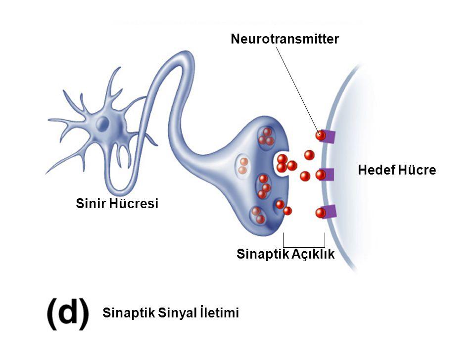(A) Ekstrasellüler bölge - Ligand bağlanır.