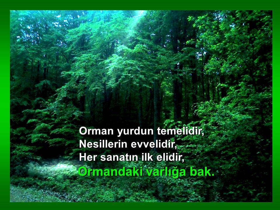 ORMAN şiir
