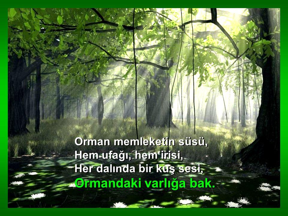 Orman yurdun temelidir, Nesillerin evvelidir, Her sanatın ilk elidir, Ormandaki varlığa bak.