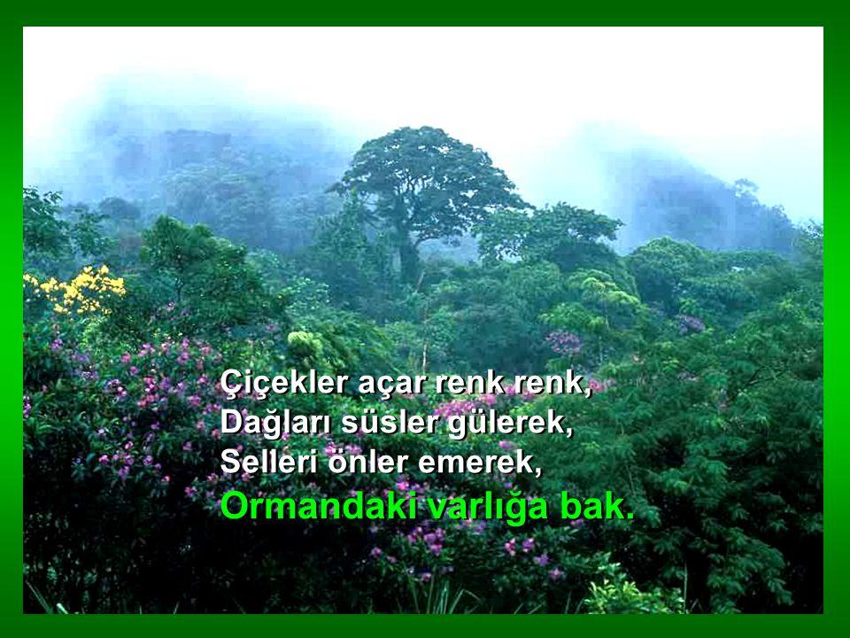 Orman memleketin süsü, Hem ufağı, hem irisi, Her dalında bir kuş sesi, Ormandaki varlığa bak.