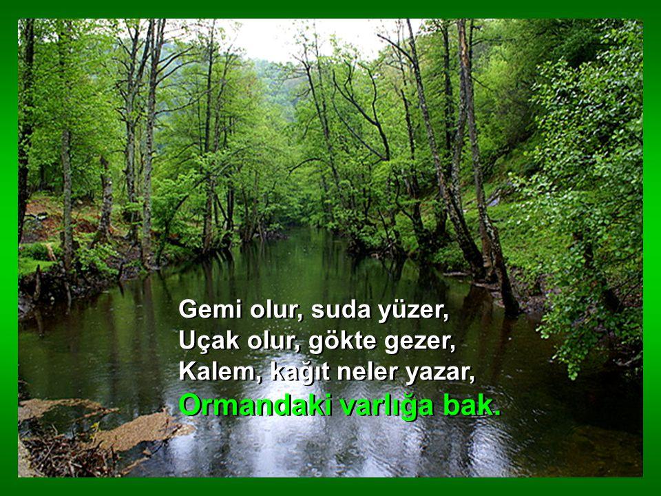 Çiçekler açar renk renk, Dağları süsler gülerek, Selleri önler emerek, Ormandaki varlığa bak.