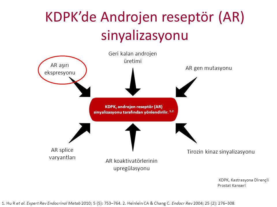 Tirozin kinaz sinyalizasyonu AR aşırı ekspresyonu AR gen mutasyonu AR splice varyantları AR koaktivatörlerinin upregülasyonu KDPK remains driven by an
