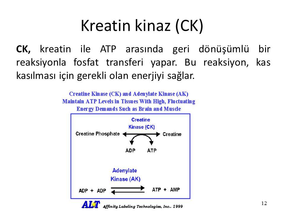 Kreatin kinaz (CK) 12 CK, kreatin ile ATP arasında geri dönüşümlü bir reaksiyonla fosfat transferi yapar.