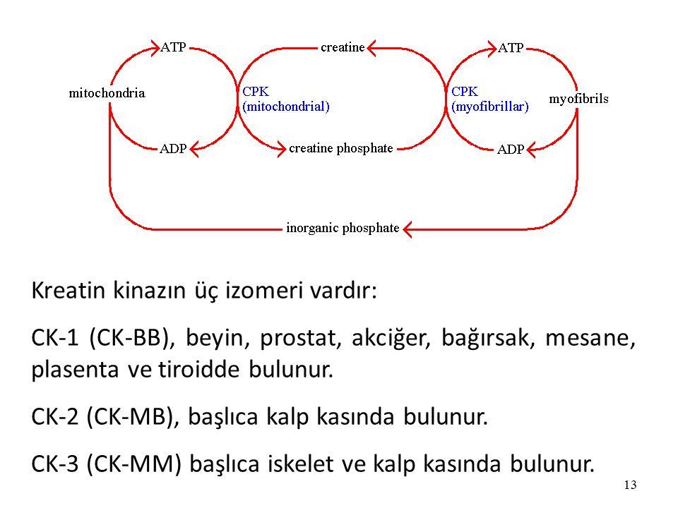 13 Kreatin kinazın üç izomeri vardır: CK-1 (CK-BB), beyin, prostat, akciğer, bağırsak, mesane, plasenta ve tiroidde bulunur.