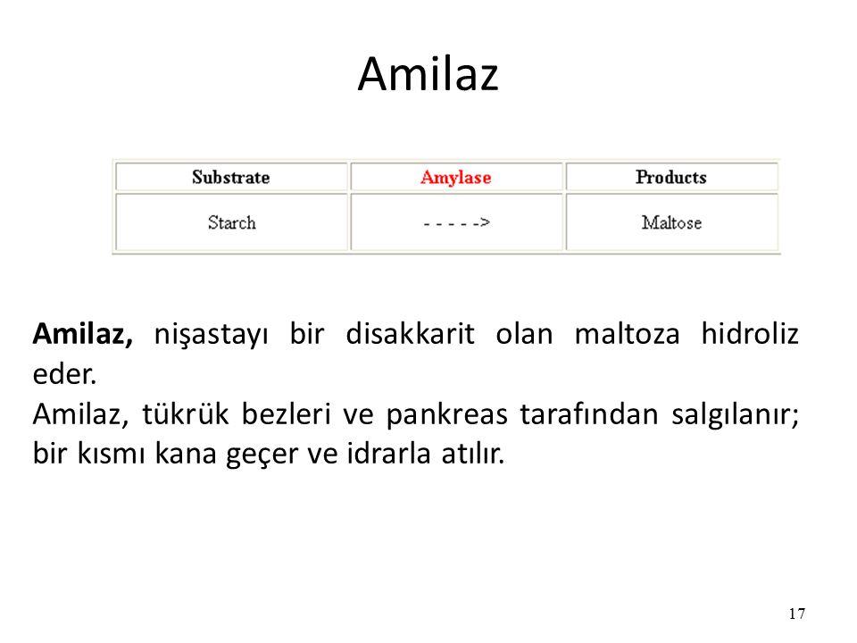 Amilaz 17 Amilaz, nişastayı bir disakkarit olan maltoza hidroliz eder.