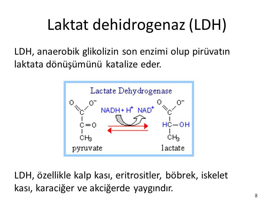 Laktat dehidrogenaz (LDH) 8 LDH, anaerobik glikolizin son enzimi olup pirüvatın laktata dönüşümünü katalize eder.
