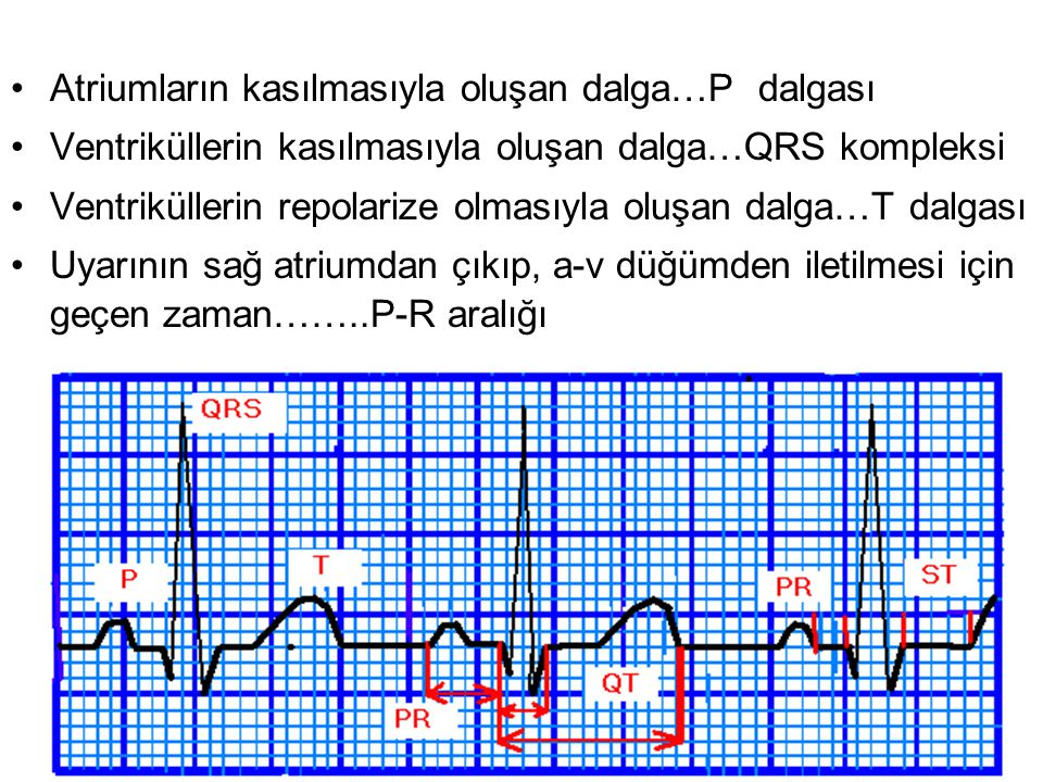 The ECG Paper Horizontally –One small box - 0.04 s –One large box - 0.20 s Vertically –One large box - 0.5 mV