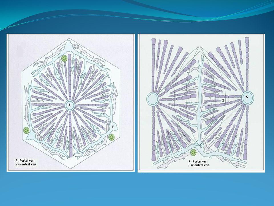 Abdominal venöz yapılarda değşiklik Caput medusa Kollateraller Cruveilhier baumgarten