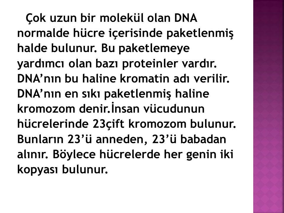 Çok uzun bir molekül olan DNA normalde hücre içerisinde paketlenmiş halde bulunur. Bu paketlemeye yardımcı olan bazı proteinler vardır. DNA'nın bu hal