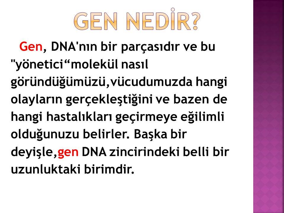 DNA (deoksiribonükleik asit), bükülmüş bir merdiven görünümünde,çift sarmal yapıda uzun bir moleküldür.
