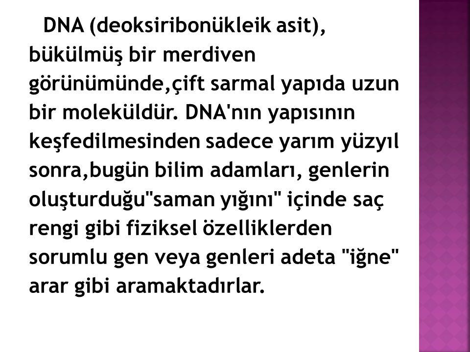 DNA (deoksiribonükleik asit), bükülmüş bir merdiven görünümünde,çift sarmal yapıda uzun bir moleküldür. DNA'nın yapısının keşfedilmesinden sadece yarı