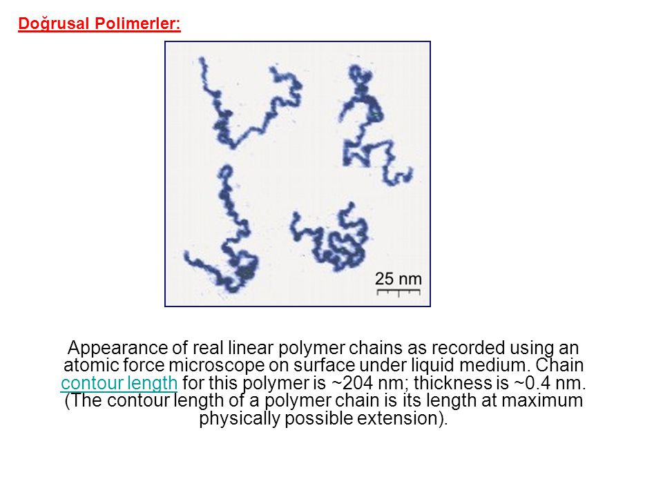 Appearance of real linear polymer chains as recorded using an atomic force microscope on surface under liquid medium. Chain contour length for this po