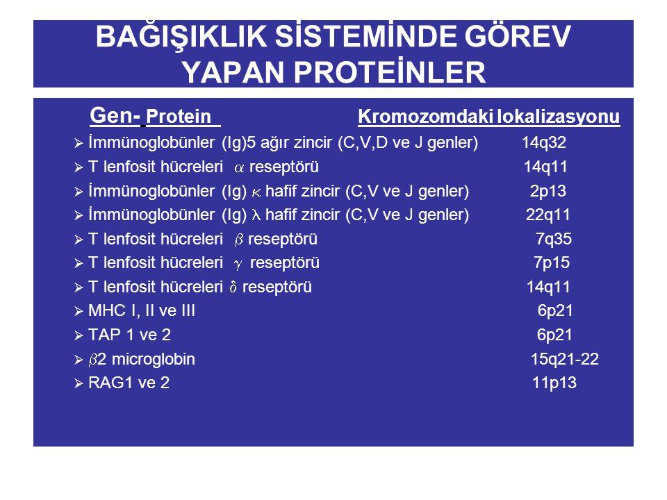 BAĞIŞIKLIK SİSTEMİNDE GÖREV YAPAN PROTEİNLER Gen- Protein Kromozomdaki lokalizasyonu  İmmünoglobünler (Ig)5 ağır zincir (C,V,D ve J genler) 14q32  T