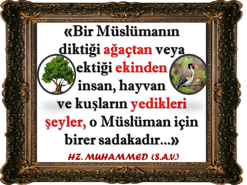 «Bir Müslümanın dikti ğ i a ğ açtan veya ekti ğ i ekinden insan, hayvan ve ku ş ların yedikleri ş eyler, o Müslüman için birer sadakadır...» HZ. MUHAM