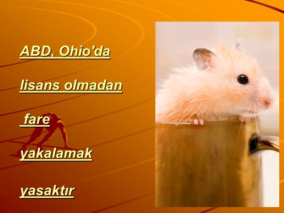 ABD, Ohio'da lisans olmadan fare yakalamak yasaktır