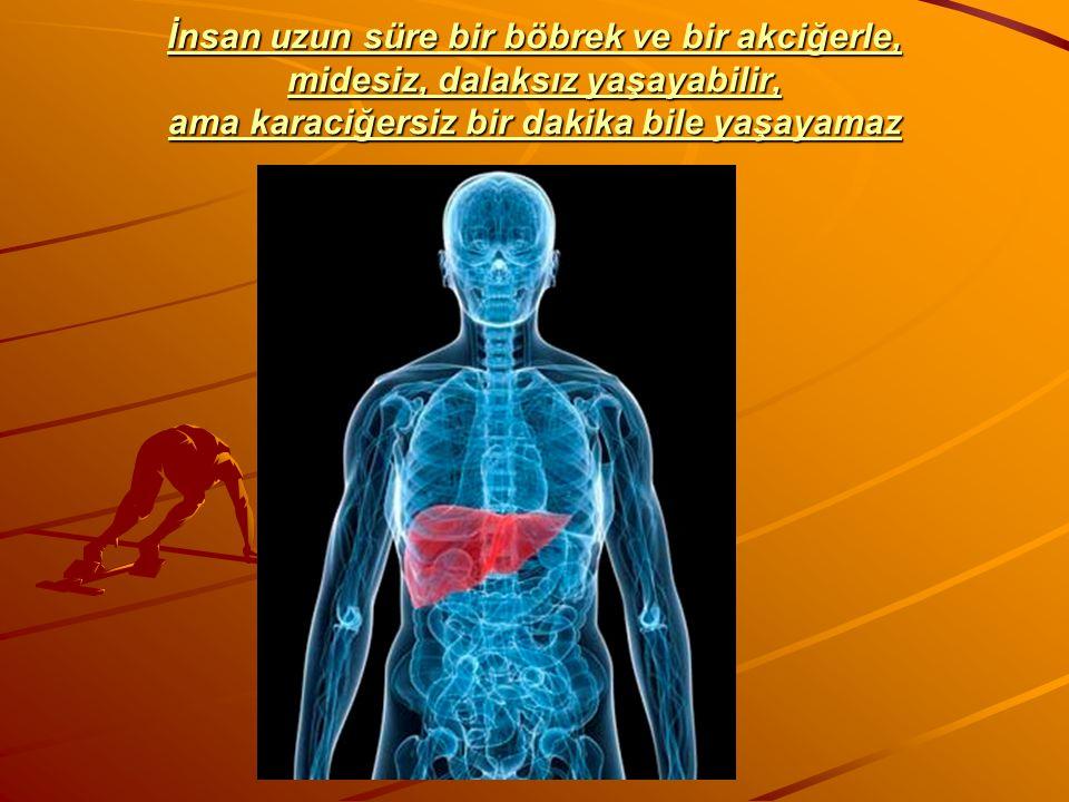 İnsan uzun süre bir böbrek ve bir akciğerle, midesiz, dalaksız yaşayabilir, ama karaciğersiz bir dakika bile yaşayamaz