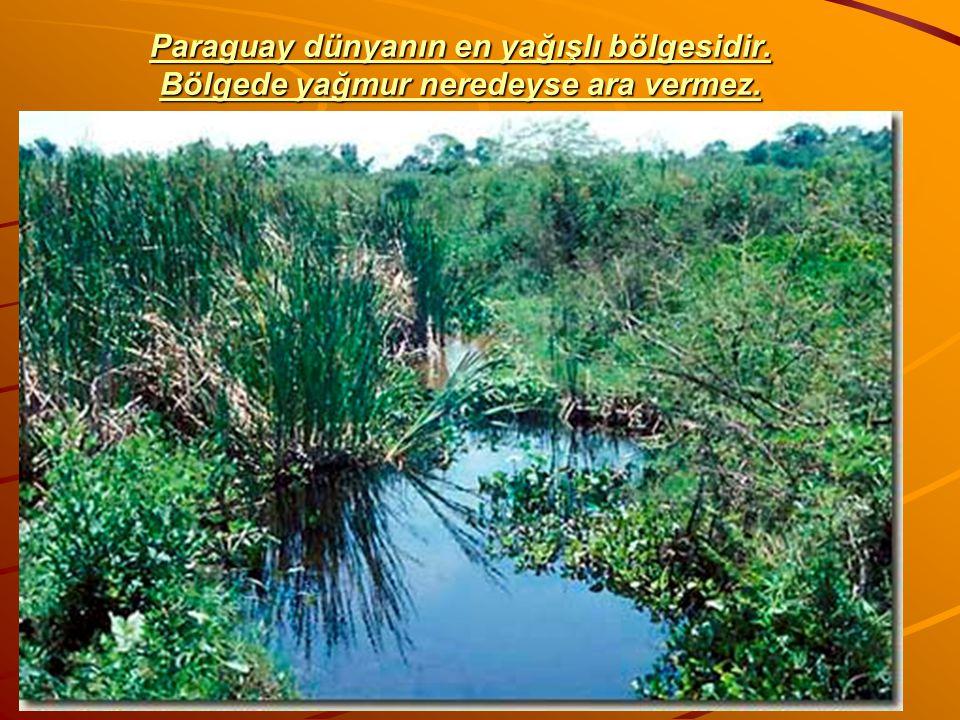 Paraguay dünyanın en yağışlı bölgesidir. Bölgede yağmur neredeyse ara vermez. Paraguay dünyanın en yağışlı bölgesidir. Bölgede yağmur neredeyse ara ve