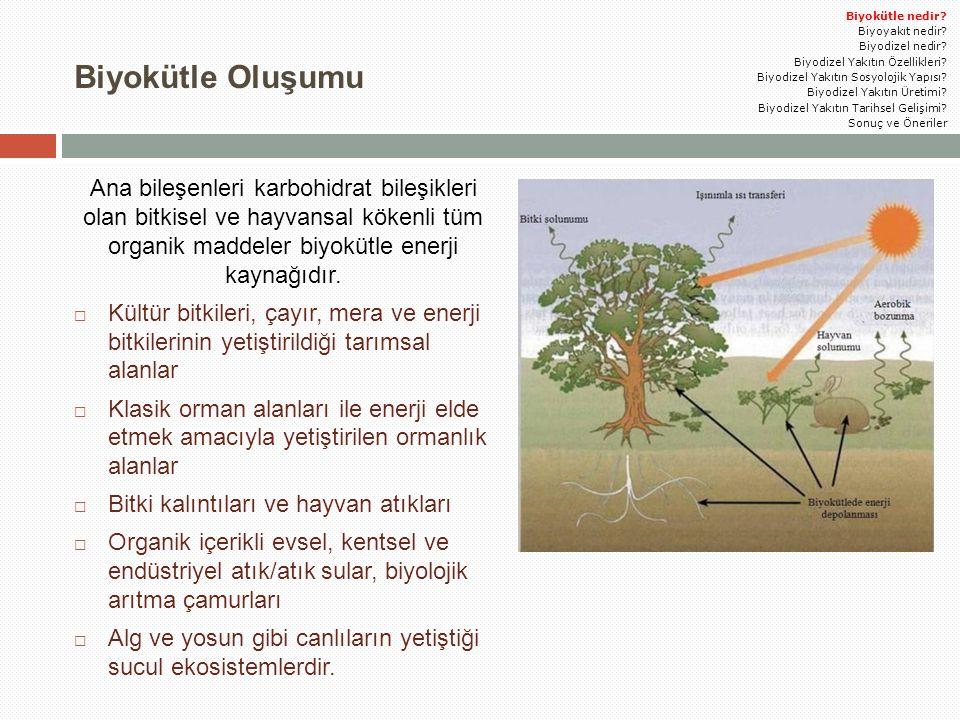  Sonuç olarak, ülkemizde biyodizel için kullanılacak yağların tarım alanları artırılmalı ve üretim teşvik edilmelidir.