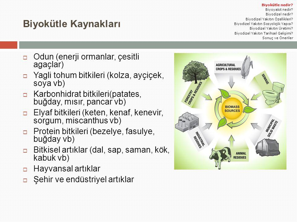 Biyokütle Kaynakları  Odun (enerji ormanlar, çesitli agaçlar)  Yagli tohum bitkileri (kolza, ayçiçek, soya vb)  Karbonhidrat bitkileri(patates, buğ