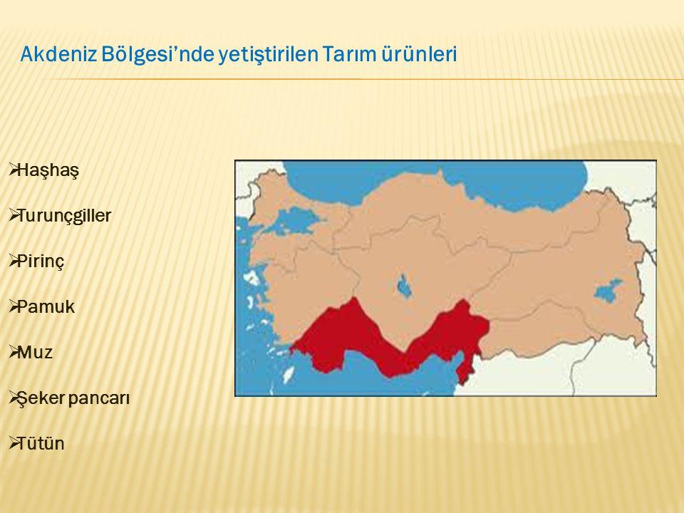 Akdeniz Bölgesi'nde yetiştirilen Tarım ürünleri  Haşhaş  Turunçgiller  Pirinç  Pamuk  Muz  Şeker pancarı  Tütün