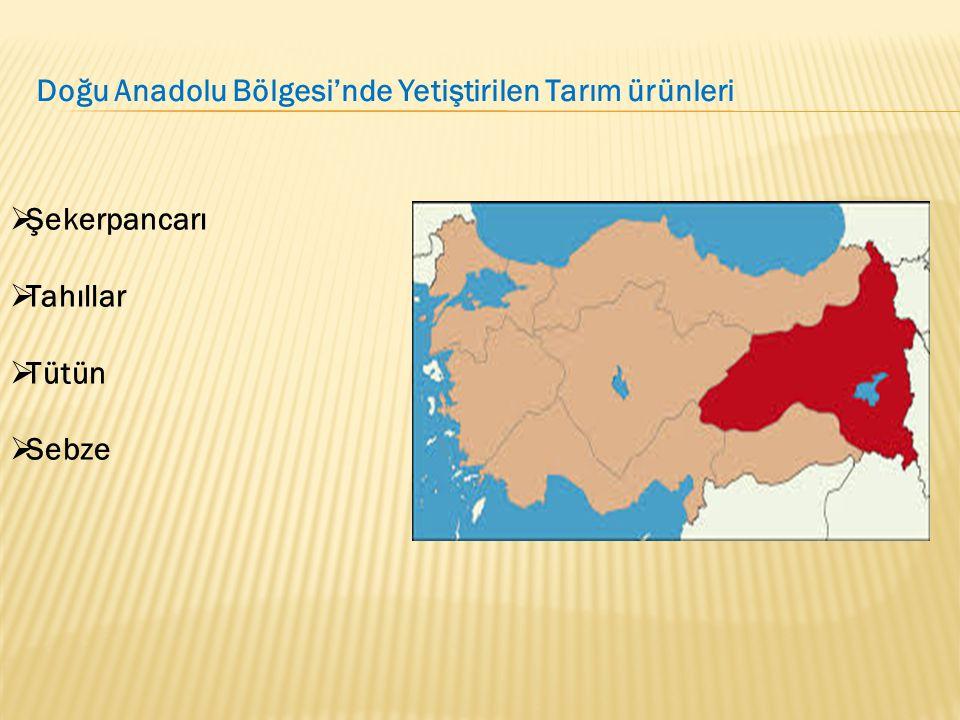  Şekerpancarı  Tahıllar  Tütün  Sebze Doğu Anadolu Bölgesi'nde Yetiştirilen Tarım ürünleri