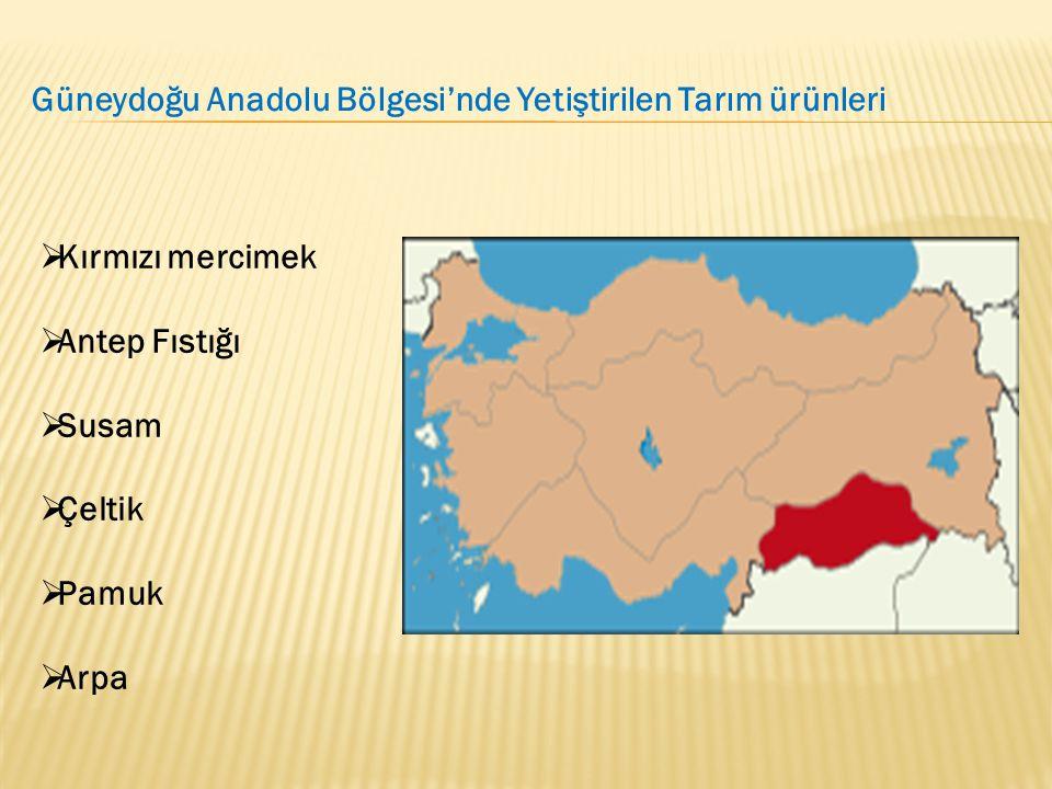  Kırmızı mercimek  Antep Fıstığı  Susam  Çeltik  Pamuk  Arpa Güneydoğu Anadolu Bölgesi'nde Yetiştirilen Tarım ürünleri