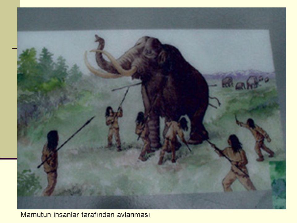 Mamutun insanlar tarafından avlanması