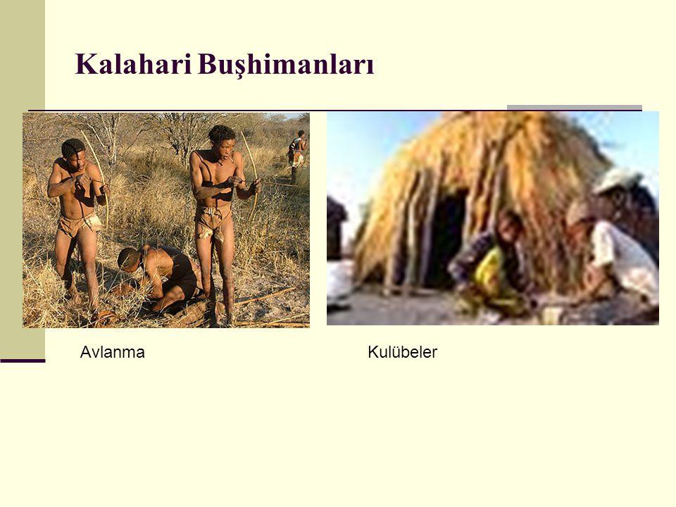 Kalahari Buşhimanları AvlanmaKulübeler