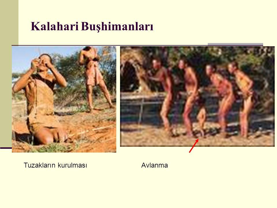 Kalahari Buşhimanları Tuzakların kurulmasıAvlanma
