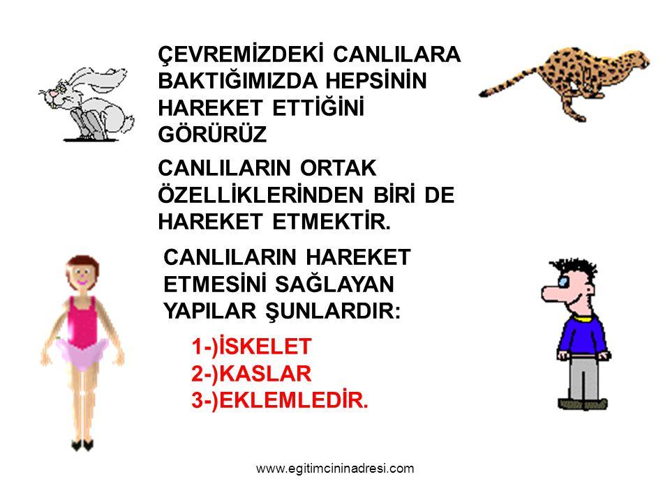 İSKELET www.egitimcininadresi.com