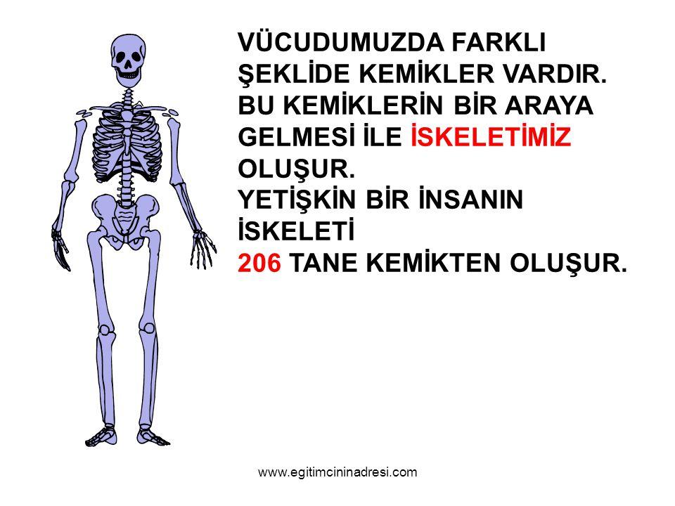 İSKELETİN BÖLÜMLERİ KAFATASI GÖĞÜS KAFESİ OMURGA KOL VE BACAKLAR www.egitimcininadresi.com